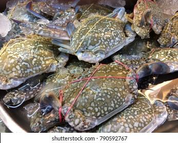 flower blue crabs portunus pelagicus