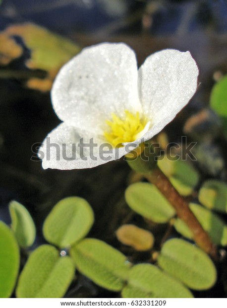 flower from bog