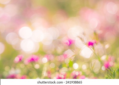Flower Bokeh for Background. Blurry Flower for Background.