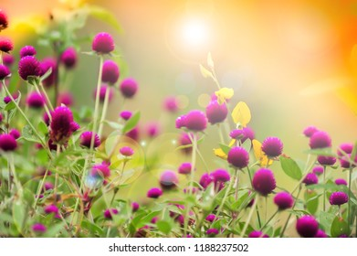 Flower Bokeh for Background textures Blurry Flower Globe Amaranth softly and romance