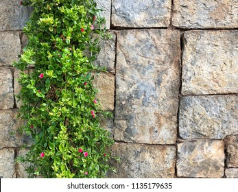flower border on a brick wall