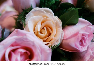 Similar Images Stock Photos Vectors Of Pink Rose 52325