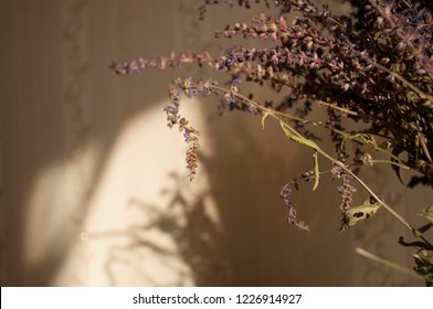 Flower. bouquet of lavender at home, shadow of flowers in wall, cozyness