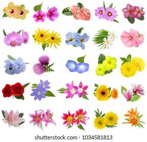Flower bouquet: seasonal Flowers isolated