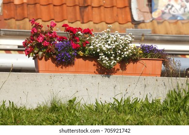 flower box with summer flowers on a wall