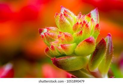 Flower bud close-up