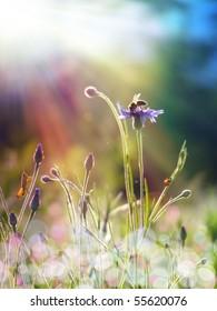 flower buds under the sun light