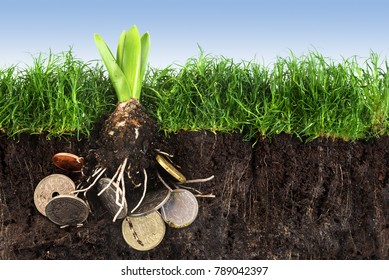 Flower bulb with roots in coins growing up in the green grass lawn with soil against the blue sky, concept for investment in environmental protection or success with organic agriculture, copy space