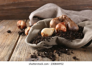 Flower bulbs and soil on sackcloth napkin on wooden table on wooden wall background