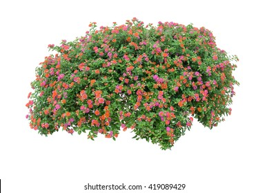Flower bush isolated on white background