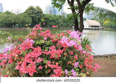 Flower bush in Lumpini park