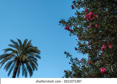Flower Bush And Palm Tree Against The Clear Blue Sky.