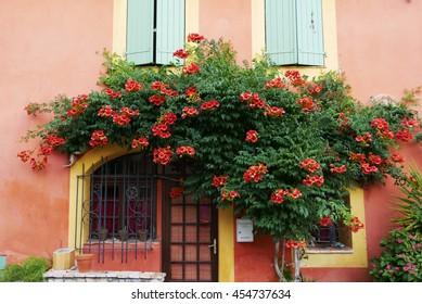 Flower bush in Provence