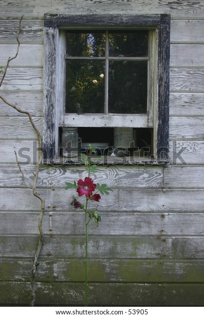 flower by shed