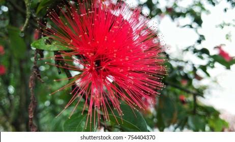 Flower at camron highland