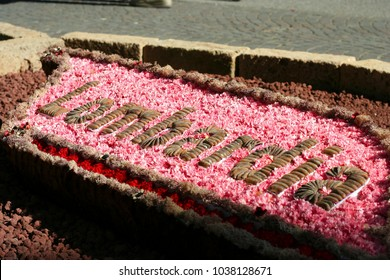 Flower carpet on the Bibione Place