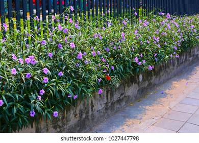 Flower in Chalerm La Park, Rachatewi, Bangkok