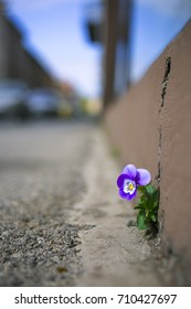 Flower in the City, a crack in the concrete.