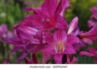 Flower Close Up, San Francisco Botanical Garden