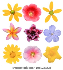 flower collection isolated on white background. White plumbago, Plumeria, Hollyhock, Lmpala Lily,Yellow oleander,