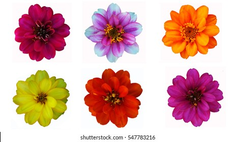 The flower collection on the white background