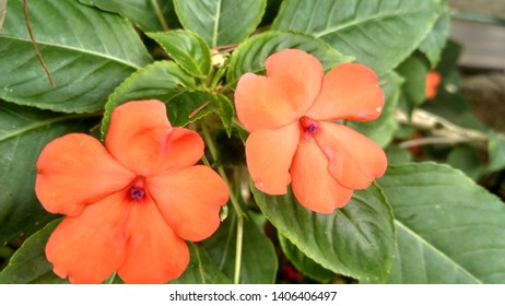 Flower Collection at Taman Bunga Nusantara Indonesia