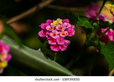 Flower color and views - Shutterstock ID 1089390050