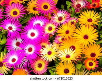 Flower is Colorful in garden