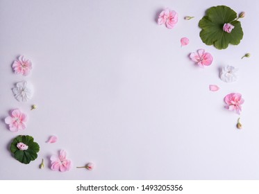 Flower composition. Border of green leaves, white and pink pelargonium flowers on a white background. Free space for your text.