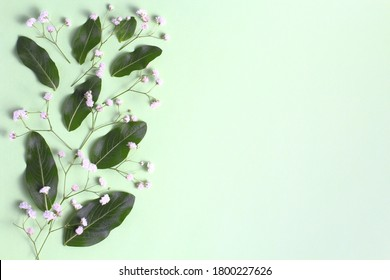 Flower composition. Gypsophilia flowers and green leaves of an exotic plant on a green pastel background in the form of a frame. Top view, flat lay, place for text, copy space.