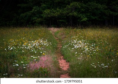 Flower covered trail leads off into the Georgia woods