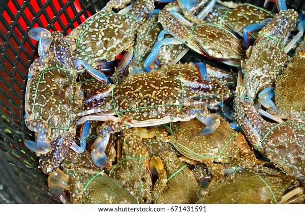 Flower Crab Blue Crab Blue Swimmer Stock Photo (Edit Now
