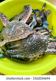 Flower crab, Blue swimmer crab, Blue manna crab, Sand crab, Portunus pelagicus in green bowl.