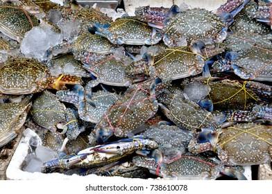 Flower crab, Blue crab, Blue swimmer crab, Blue manna crab very fresh
