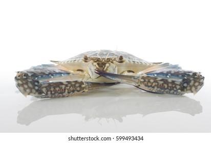 Flower Crab (Portunus pelagicius) over white background