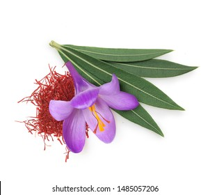 Flower crocus, dried saffron spice and eucalyptus leaves isolated on white background.