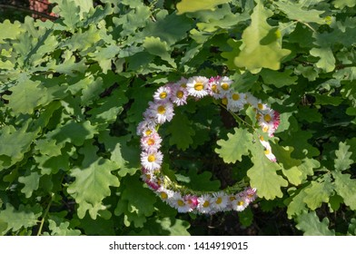 Flower crown of the meadow hanging in the oak branch. Summer Solstice Day - Midsummer Day. Ligo night.
