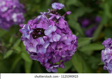 Flower culture in garden