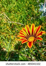 Flower in Czech Republic