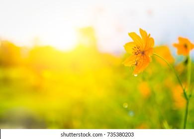Flower in day light