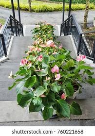 flower decoration the step