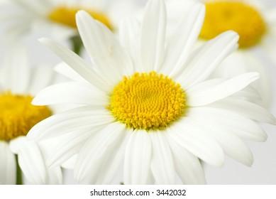 Flower detail, shallow DOF