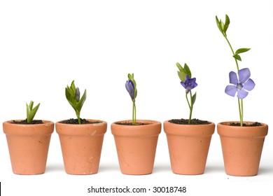 Flower development