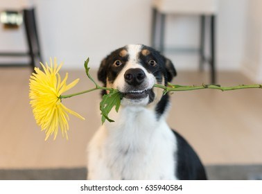 Flower From A Dog