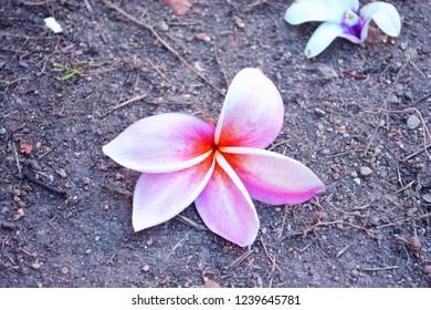 Flowers Drop On The Floor Images Stock Photos Vectors Shutterstock