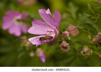 Flower dust transport