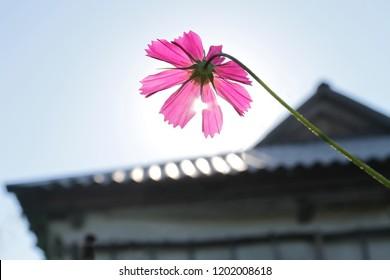 the flower is facing the sun like a solar panel