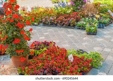 Flower fair in medieval village in Italy