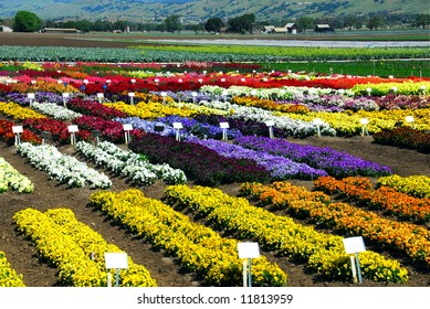 Flower Farming In Central California