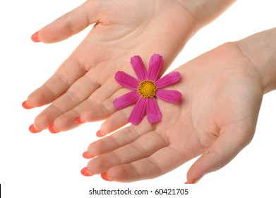 Flower in female hands. It is isolated on a white background